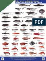 Deep Sea Fish Poster