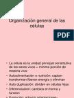 3Organización General de Las Células