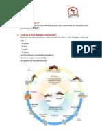 265620729 Resumen Dengue