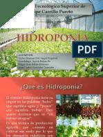Ecotecnia-HIDROPONIA-pptx