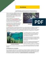 Ecosistema..docx