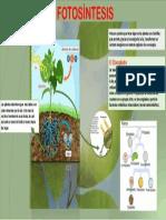infograma ecologia