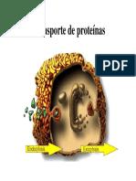CLASE 7 Transporte de Proteínas