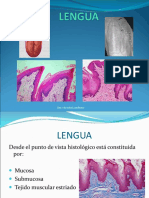 11-lengua