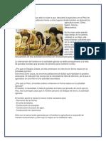 El Neolítico Paleolitico y Edad de Los Metales en El Perú