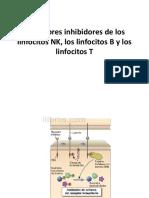 Receptores Inhibidores de Los Linfocitos NK, Los