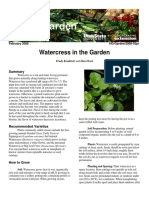 Watercress in the Garden