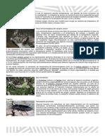 TALLER DE SENTIDO ESPECIALES.docx