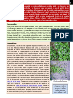 botánica - Glechoma hederacea