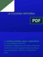 La Columna Vertebral Expo