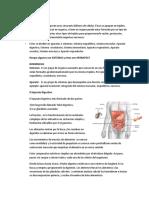 Resumen Organos, Aparatos, Sistemas
