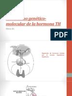 Mecanismo-genético-molecular-de-la-hormona-TH.pptx