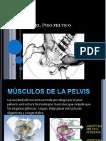 anatomadelpisoplvico-120426032821-phpapp01