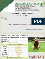 Razas de Perros Sabuesos_Jaramillo