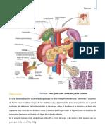 Pancreas..
