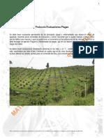 Asohofrucol - Protocolo Evaluacion de Plagas Aguacate