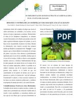 HOJA DIVULGATIVA Nb05-2011 -MIP COCHINILLAS Y ESCAMAS.pdf