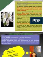 Problema Del Conocimiento Electivo 3c2b01 (1)