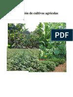 Asocición de Cultivos Agrícolas