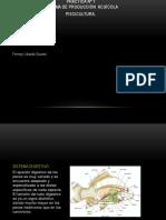 Diapositivas Practica 1 Pisicultura
