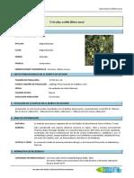 Datos Básicos de Bidens Aurea (Aceitilla)