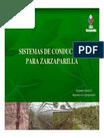 Sistemas de Conduccion Para Zarzaparilla-Alejandroojeda