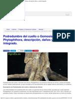 Podredumbre Del Cuello o Gomosis de Cítricos, Phytophthora, Descripción, Daños