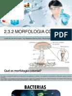 Morfologia Colonial