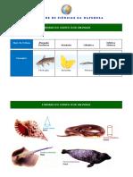 formas-animais