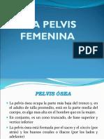 Pelvis Femenina