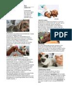 Vacunas Para Animales