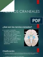 Diapositiva - Nervios Craneales.pptx