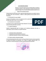 etapas del  embarazao.docx