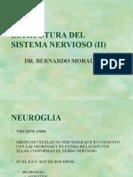 Estructura Del Sistema Nervioso (II)