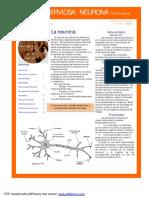 01. Neurona I