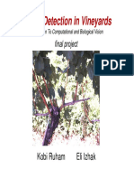 Grape Detection in Vineyards Ppt