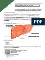 PRACTICA DISECCION DEL CORAZON.docx