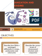 Chromosomes, DNA Structure and Topology