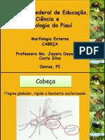 Morfologia Externa - Cabeça insetos