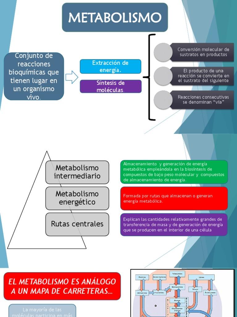 Preguntas sobre metabolismo del hierro analitica