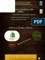 1er Seminario - Fiosiología Del Árbol