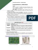 Manual de corrección evaluación diagnóstica CTA - 1° (1)