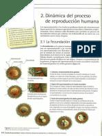 desarrollo-embrionario