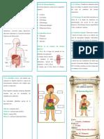 Triptico-Sistema-Digestivo.docx