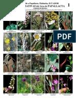 Ecuador- Papallacta Plantas Llamativas