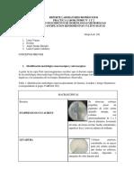 Reporte Laboratorio Bioprocesos 123