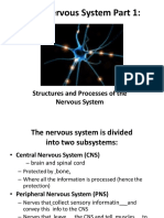 Nervous System part 1 grade 12 bio