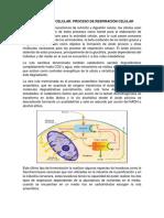 Metabolismo Celular Bio Lab