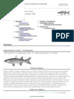 FAO Fisheries & Aquaculture - Cultured Aquatic Species Fact Sheets - Mugil Cephalus (Linnaeus, 1758)