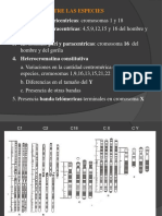 Genoma Humano II